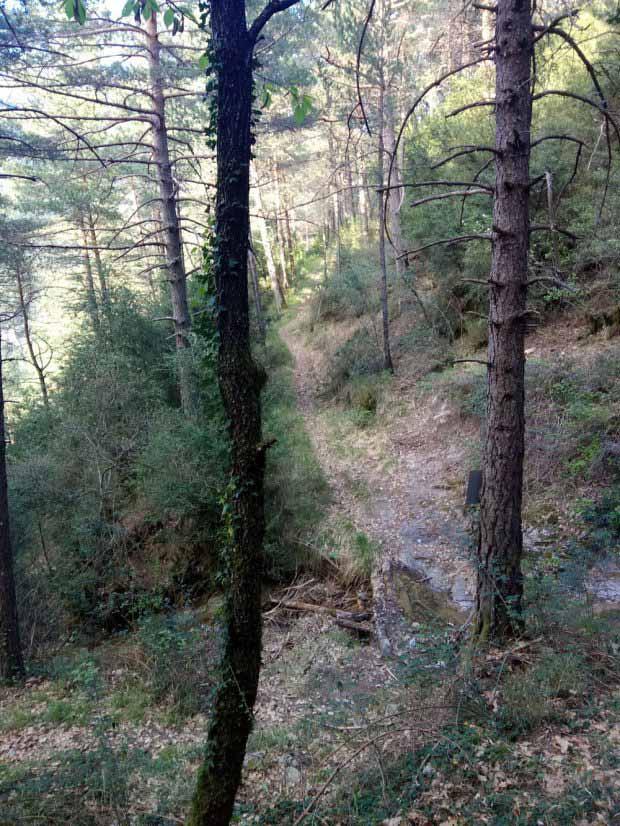 La senda por el pinar
